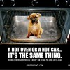 Saving Dogs From Fatal Heatstroke!‏