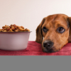 Ask A Trainer: My dog only eats 'people food'!