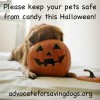 Spare companion animals the Spooks this Halloween