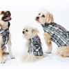WIN! A Canada Pooch jacket for your pooch!