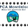 SPCA Montérégie Mega Cat Adoption Day