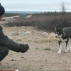 Nunavik sled dogs need first aid and care too