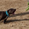 Ask a Trainer: Are your dogs playing too rough? How an excellent recall can help!
