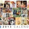 Be Seen in the 2014 Calendar for Animal Rescue!
