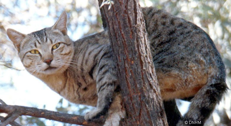 Do feral cats stay in one place