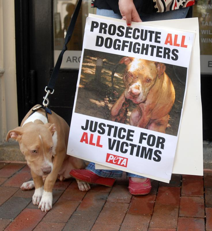 how to get involved physically to stop animal abuse