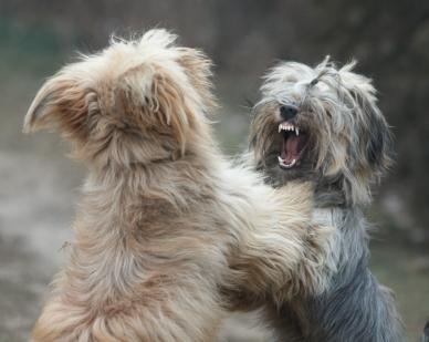 Ask A Trainer: My dogs fight when company comes over