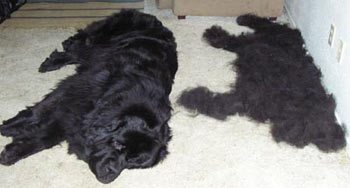 simple sheds remedies pets home dog inexpensive shedding
