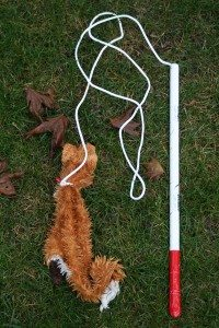 flirt pole work dogs To get the most out of bully max, you can exercise your dog using a flirt pole flirt poles bring out your dog's natural prey drive the.