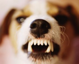 dog-growl-communication-675553-