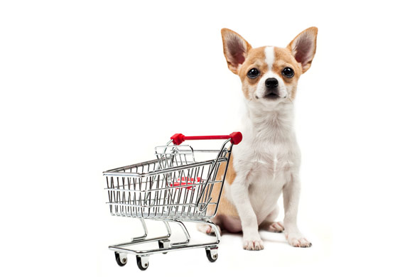 dog-shopping-cart-shutterstock_97380788
