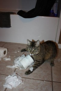 Kira decided to get into the new package of toilet paper, chirping with delight at what she had found.