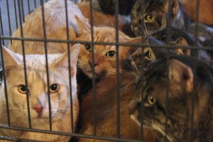 Chats_cage_saisie_oct2013