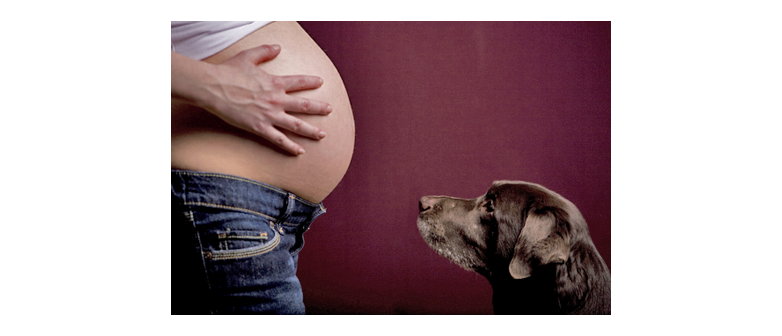 Can Dogs Detect Pregnancy in People?