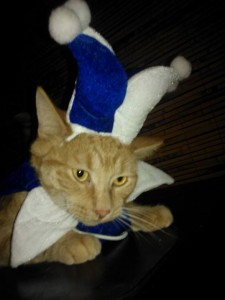 Remember Harry? He has been rocking it in his forever home! Funny Harry dresses up for every occasion, including the holidays. For Harry, life is an adventure and he keeps his parents (and kitty siblings) entertained every day!