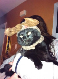"""Ollie was adopted as an orphan kitten and was bottle fed by his mom Debbie. Here he is, putting on his best """"shame"""" face for the camera. Don't worry! Once the photo was taken, he was off to cause more kitty trouble (payback to his mom for dressing him up!). Happy Holidays to Ollie and his family!!"""