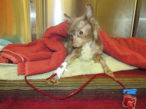 Nelson needed a blood transfusion to live.
