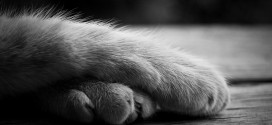 Why are we still declawing cats in Canada?