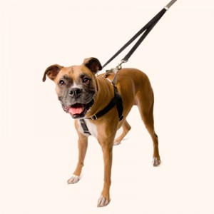 freedom-no-pull-dog-harness-1