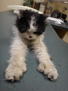 Velo at Animal Health Clinic: extremely weak (please check out those adorable feet).