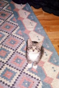 Tinkerbelle as a baby.